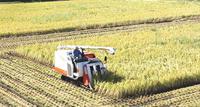 裏の田んぼで稲刈りが始まった - 東金、折々の風景