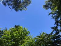 空を見るとまた夏が戻ったかのようです。 - Naturfreude