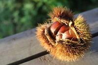 処暑:初秋のころ - 週刊「目指せ自然農で自給自足」
