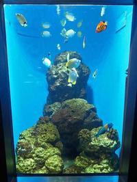 葛西臨海水族園:ハワイ沿岸~チョウチョウウオの舞とハワイの掃除魚 - 続々・動物園ありマス。