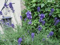 眠りとアロマセラピートリートメント - 瑠璃色の庭