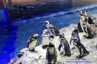 マゼランペンギンがメインのすみだ水族館 - 自然のキャンバス