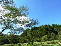 やっと見つけました/稲刈り準備 - 千葉県いすみ環境と文化のさとセンター