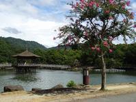 奈良・浮見堂のサルスベリ - 彩の気まぐれ写真