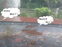メダカになったハエンボーの詩8月25日(土)はれ時々雨 - トチノキの詩2