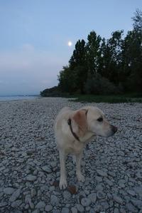 犬のちから、、ナナのちから - ドイツの陽だまり