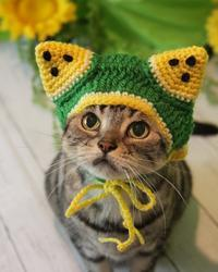 スイカ祭りにゃよ! - 愛しき猫にゃん♪