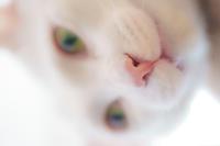 ピンクの鼻^^ - Omoブログ