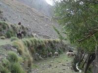 5日目:Trekking day2 Khadi bork→Spanphocho-go - chococoの旅の備忘録