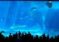 美ら海水族館 - may's room  -まったりマヤの部屋-