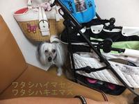 バランスボールフィットネスセミナー in 仙台 - 毎日笑顔♪ 裸犬☆温・真珠・絆愛Ⅱ