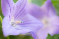 秋は紫 - 柳に雪折れなし!Ⅱ