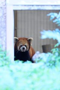 8月26日(日)気後れ - ほのぼの動物写真日記