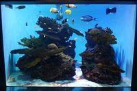 葛西臨海水族園:紅海~サンゴ礁の魚たち - 続々・動物園ありマス。