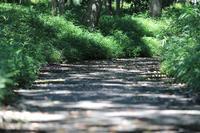 まゝに/8月の散策武蔵丘陵森林公園1 - Maruの/ まゝに