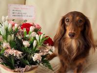 18年8月26日 嬉しいお花さん! - 旅行犬 さくら 桃子 あんず 日記