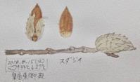#ネイチャー・ジャーナル #Naturejournal 2018.8.15(水)曇気温↑33℃↓27@皇居東御苑 - スケッチ感察ノート (Nature journal)