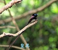 何にも言わないで見て、ああなるほどこんな野鳥がいるんだと、思って頂ければ嬉しいです。誠 - 皇 昇