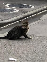 地域ねこハーレム - 愛犬家の猫日記