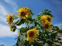 暑い夏の日 - ひめたんママちゃんのブログ