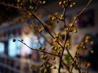 今週のWORLD BOOK CAFEさんは「ツルウメモドキ」。2018/08/25。 - 札幌 花屋 meLL flowers