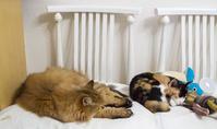 ささやかな目標 - おまけ猫たちとの日常