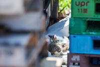 自由猫写真館 2018 #5 - おまけ猫たちとの日常