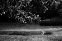 kaléidoscope dans mes yeux2018半径500メートルの情景#40 - Yoshi-A の写真の楽しみ