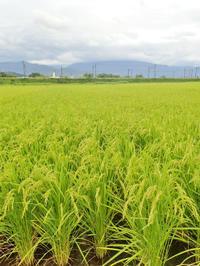兼業農家は草刈り作業に汗を流しました - 浦佐地域づくり協議会のブログ