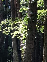 月明かりの蝉時雨 - 木洩れ日の森から