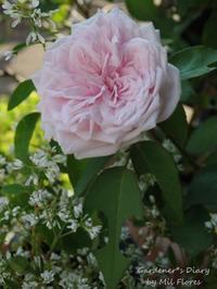 You made my day.. - Gardener*s Diary