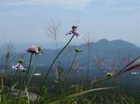 スキー場の花 - オバサンが行く ヒマラヤの青いけしの旅/改め   時々蔵王の花たち