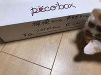 Pecobox来ました! - 土筆の庭