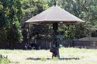 「アフリカサバンナ」ゾーンの動物たち - 動物園放浪記
