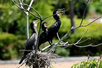 公園の鳥 - 暮らしの中で