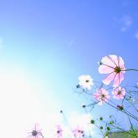 穏やかな日 - Pastel color