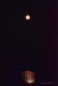 月夜の物語@ 水上池 - 東大寺が大好き