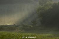 朝霧のカーテンに - ekkoの --- four seasons --- 北海道