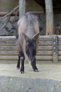 夏毛の生き物 - 動物園へ行こう
