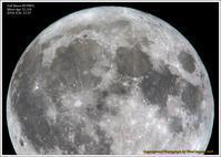 満月 - 野鳥の素顔 <野鳥と・・・他、日々の出来事>