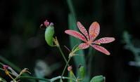 2018猛暑復活 - 紀州里山の蝶たち