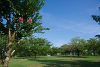 サルスベリ風景②(松山総合公園) - かたくち鰯の写真日記2