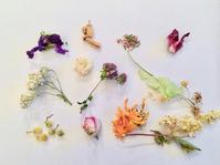 """ハーバル&アロマティックライフ虎の巻講座 のお知らせです♡ - 英国メディカルハーバリスト&アロマセラピストのブログ""""Herbal Healing 別館"""""""