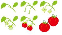 続・北辰会夏季研修に参加して来ました(中平) - 柚の森の仲間たち