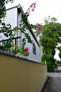 サルスベリの花 - hanako photograph