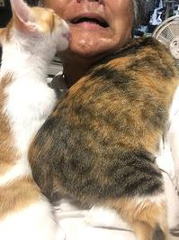 モテた - ぶつぶつ独り言2(うちの猫ら2021)