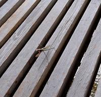 月見台での逢瀬 - 金沢犀川温泉 川端の湯宿「滝亭」BLOG