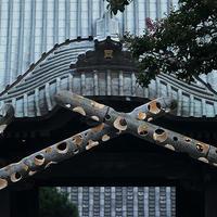 龍口寺竹灯籠祭り宵の口18.08.04 17:59 - スナップ寅さんの「日々是口実」