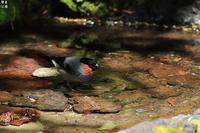 日本一のお山では毎年会う事が出来るウゾ - 野鳥公園