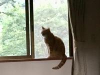 ワン友旅行  2018年8月27日 松原湖 - 小鉄と斗和の親子日記